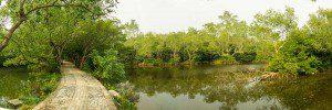 Hong-Shu-Lin-Mangrovenwald