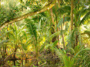 Kokos-Wald-Wenchang-Hainan