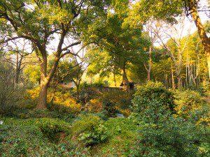 botanischer-Garten-Hangzhou-2