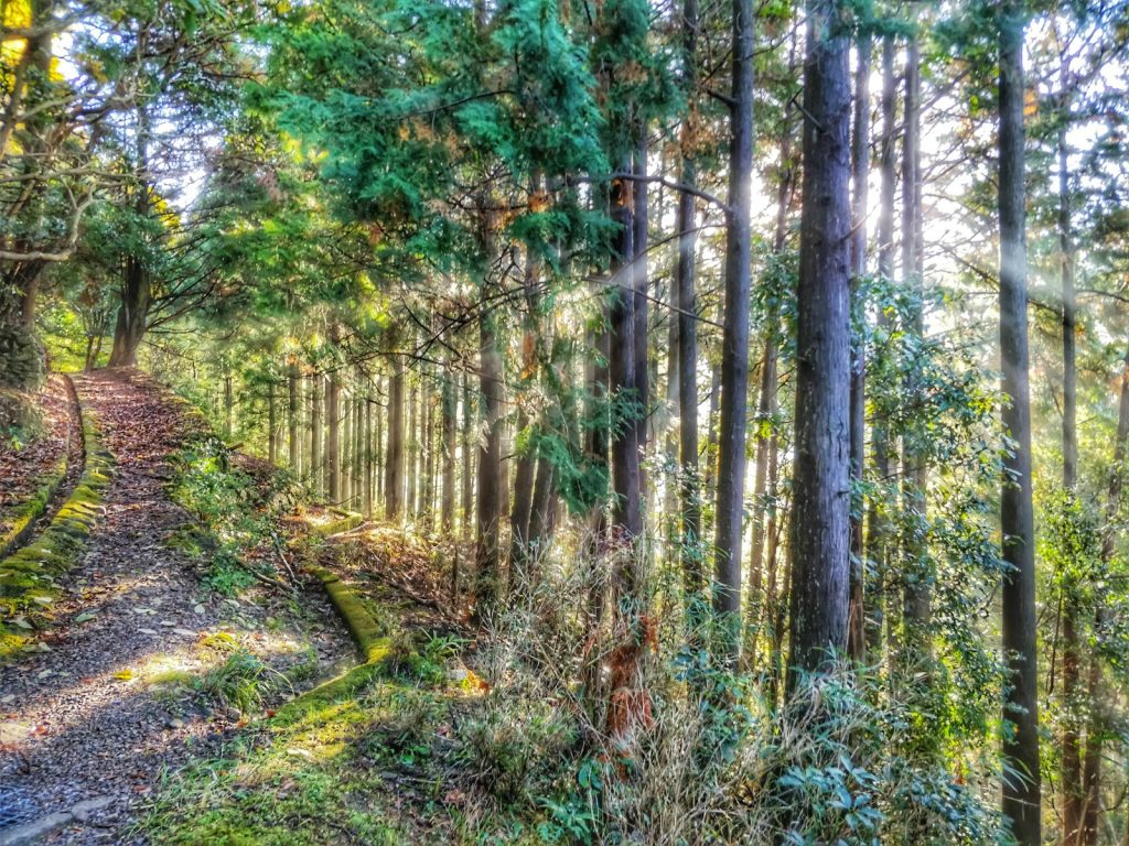 bright forrest and path
